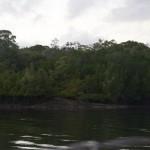 I vattnet vid flodbanken säger det plask, krokodil?