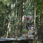 Wangi falls - Lichtfield